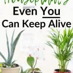 Houseplants in front of window with text overlay 10 Air-Purifying Houseplants Even You Can Keep Alive