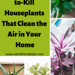 Enjoy clean air in your home with these house plants that are impossible to kill
