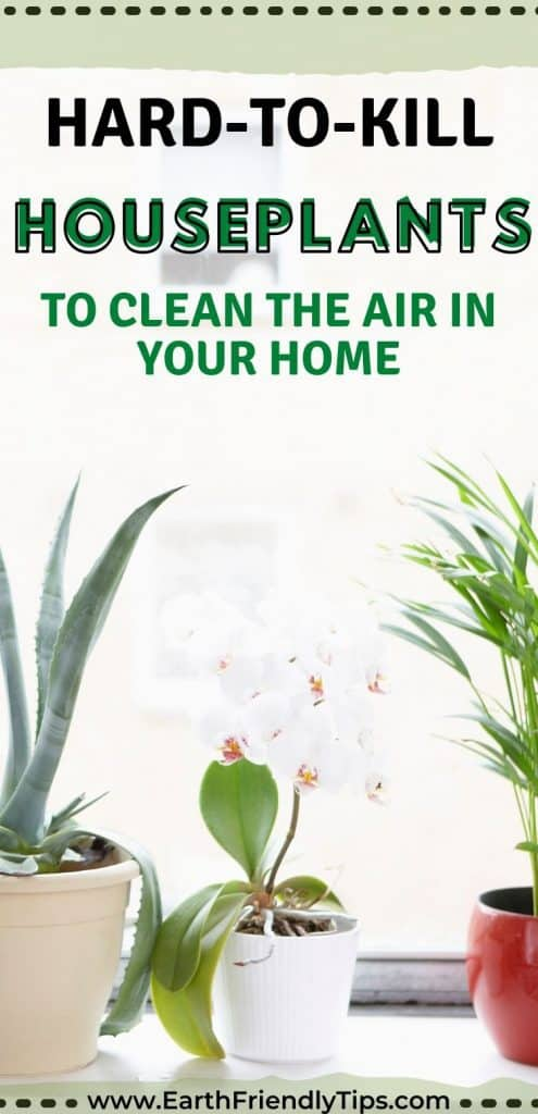 Houseplants in window text overlay Hard-to-Kill Houseplants to Clean the Air in Your Home