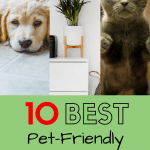 10 Best Pet-Friendly Houseplants