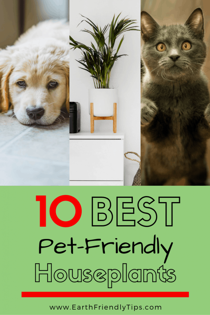 Puppy, houseplants, and cat with text overlay 10 Best Pet-Friendly Houseplants