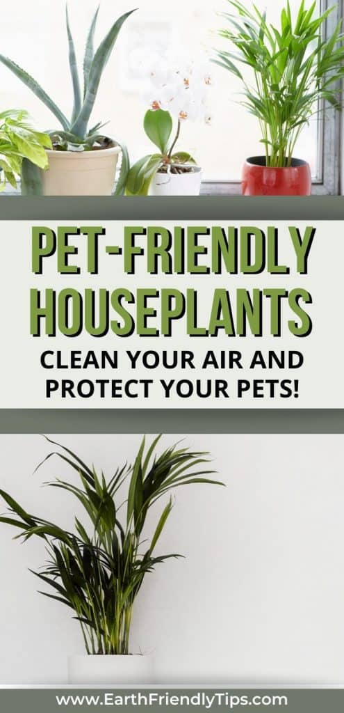 Houseplants in window text overlay Pet-Friendly Houseplants