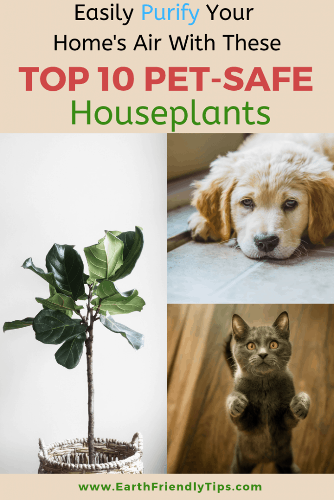 Puppy, cat, houseplant with text overlay Easily Purify Your Home's Air With These Pet-Friendly Houseplants