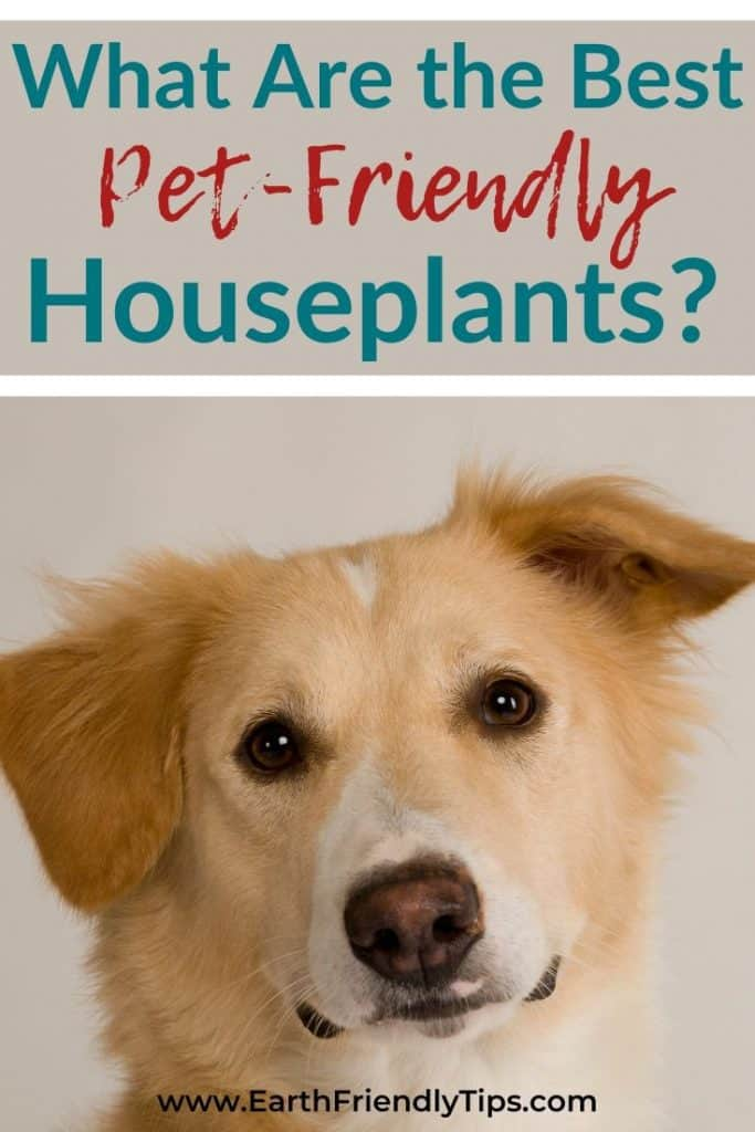 Close-up of dog with text overlay What Are the Best Pet-Friendly Houseplants