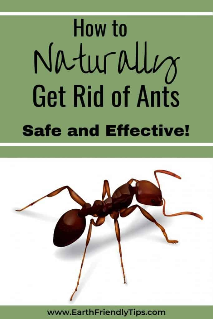 Close up of ant with text overlay How to Naturally Get Rid of Ants