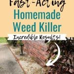 Sidewalk with dead weeds text overlay How to Make Fast-Acting Homemade Weed Killer
