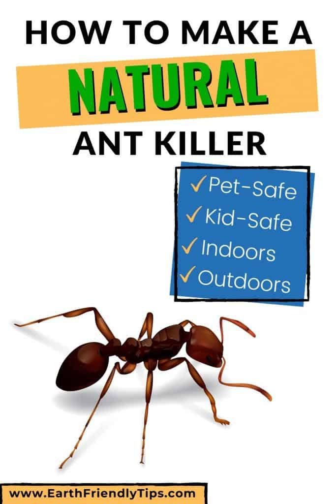 Illustration of ant text overlay How to Make a Natural Ant Killer