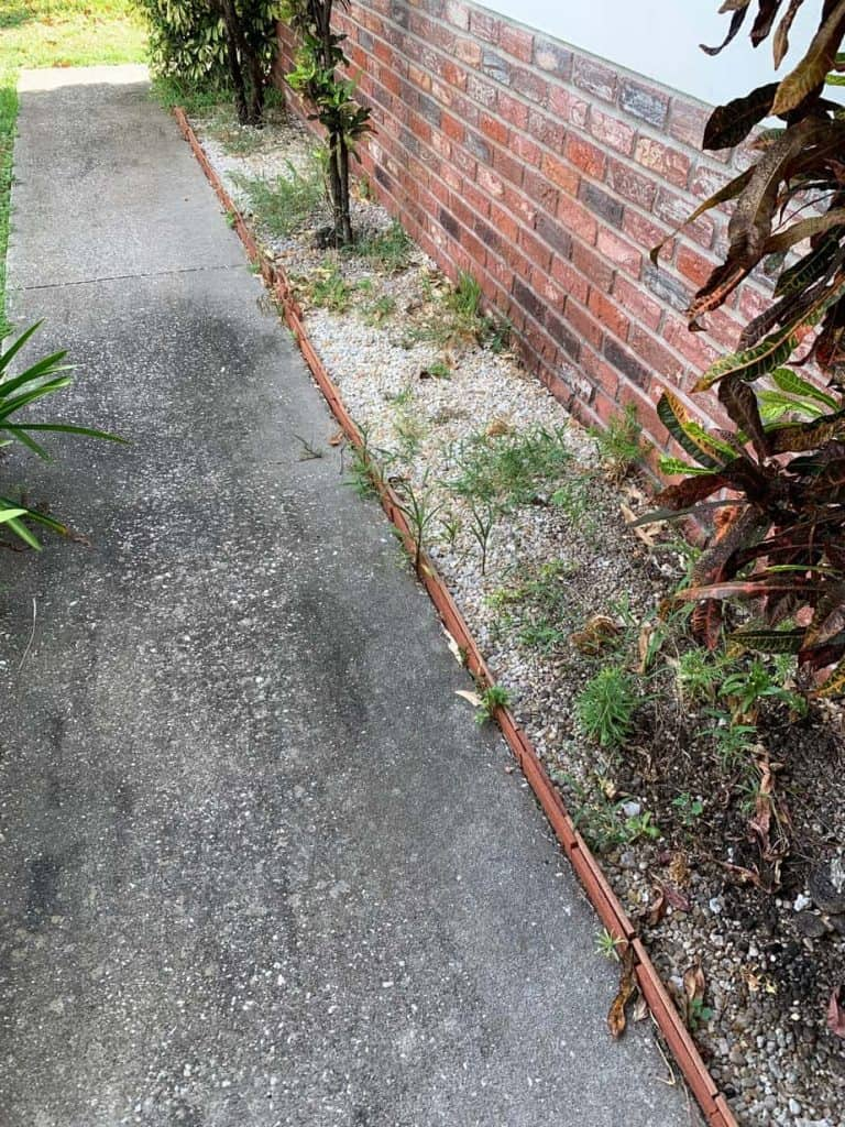 Sidewalk with weeds
