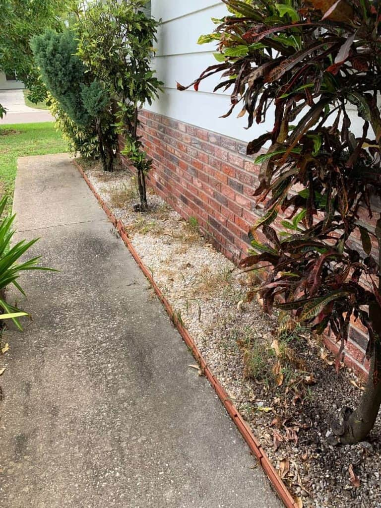 Sidewalk with dead weeds