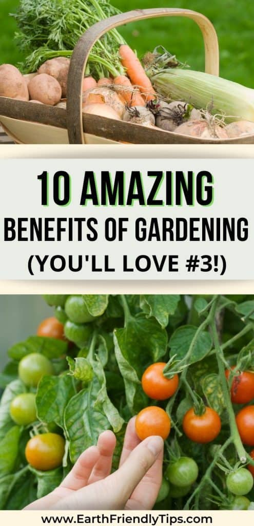 Basket of vegetables person picking tomato text overlay 10 Amazing Benefits of Gardening