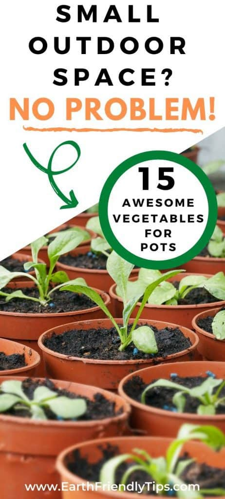 Plants in container garden text overlay 15 Awesome Vegetables for Pots