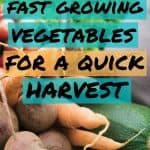 Vegetable bunch with text overlay 15 Fast Growing Vegetables for a Quick Harvest