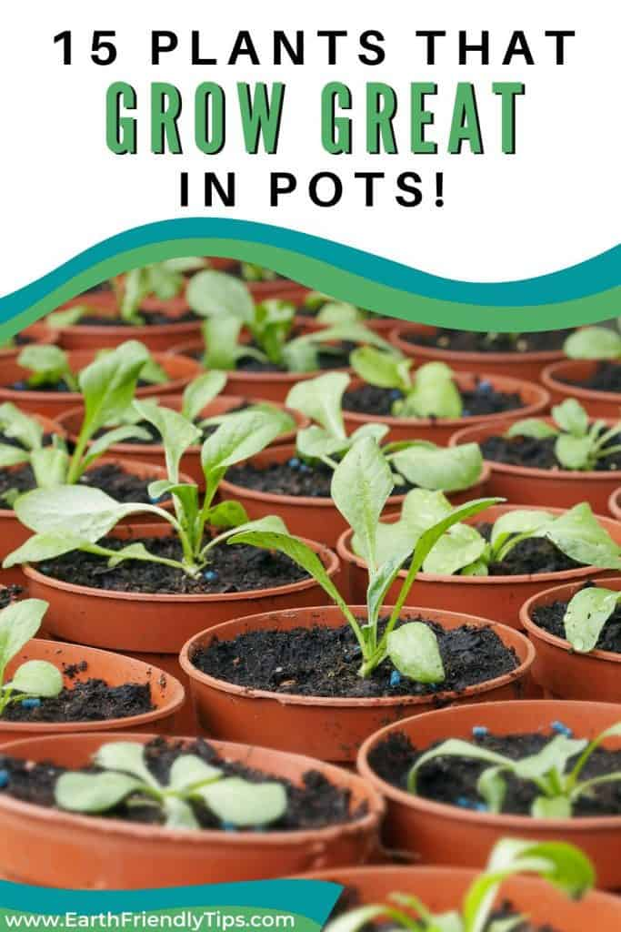 Seedlings in plant pots text overlay 15 Plants That Grow Great in Pots