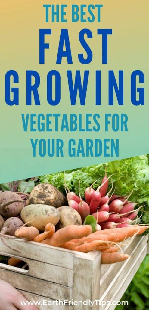 Crate of vegetables text overlay The Best Fast Growing Vegetables for Your Garden