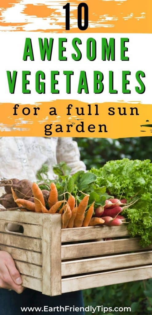 Crate of vegetables text overlay 10 Awesome Vegetables for a Full Sun Garden