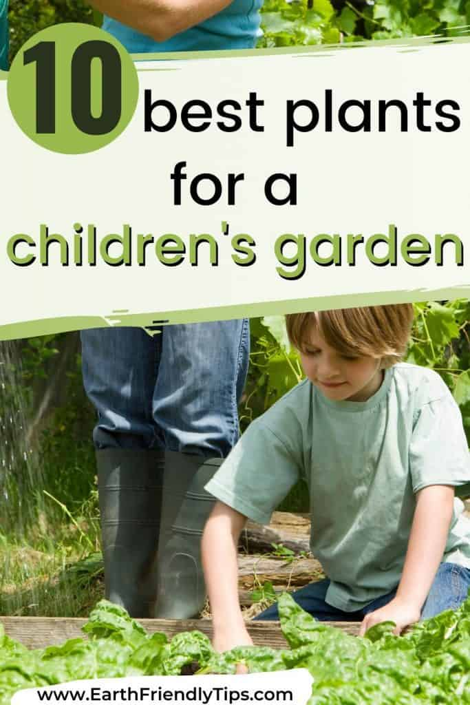 Boy digging in garden text overlay 10 Best Plants for a Children's Garden