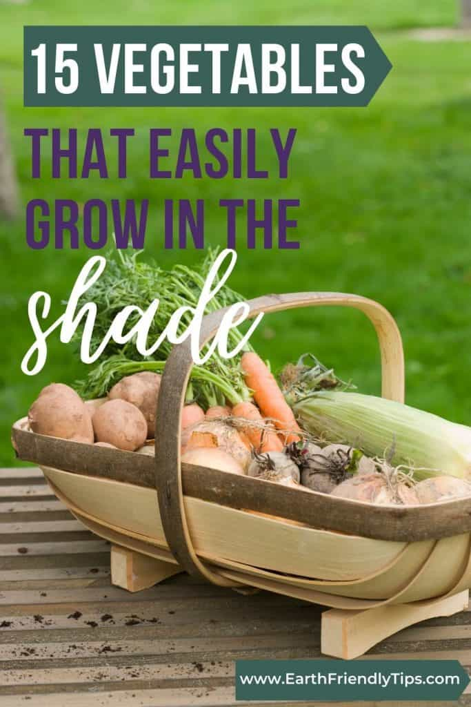 Basket of vegetables text overlay 15 Vegetables That Easily Grow in the Shade