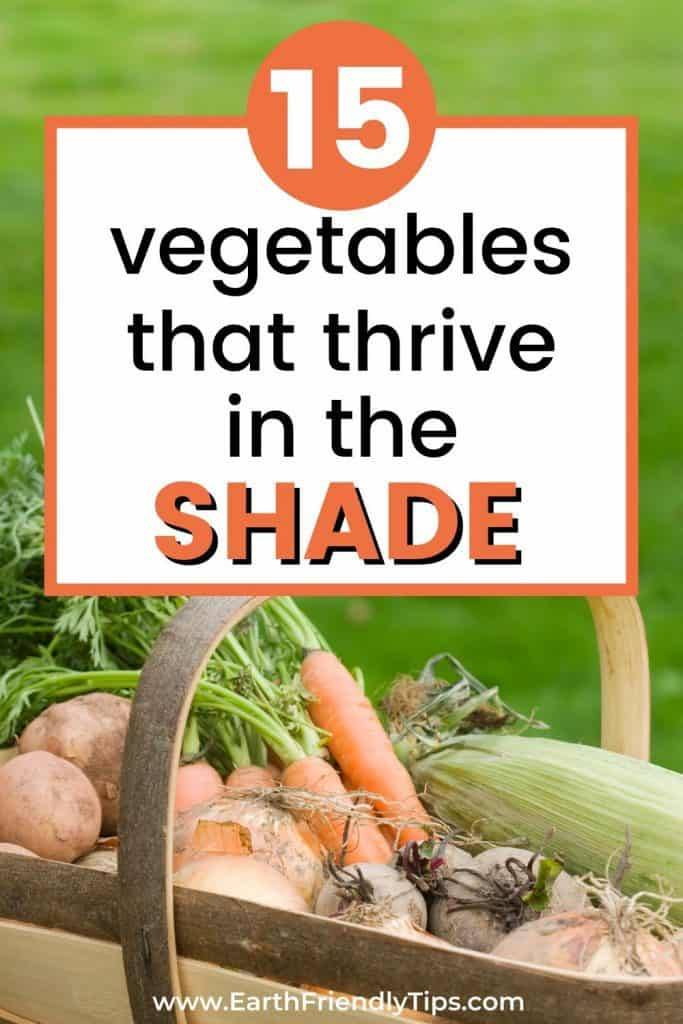 Vegetables in basket text overlay 15 Vegetables That Thrive in the Shade