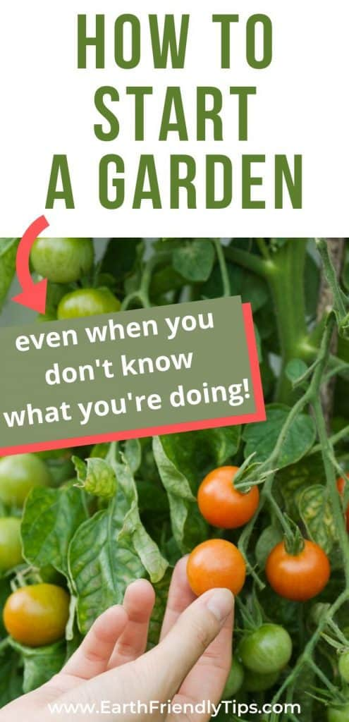 Tomato plant text overlay How to Start a Garden