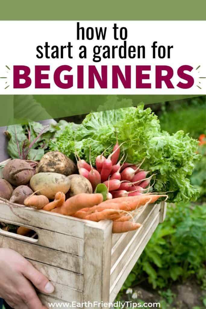 Box of vegetables text overlay How to Start a Garden for Beginners