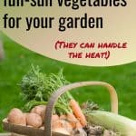Basket of vegetables text overlay The Best Full Sun Vegetables for Your Garden