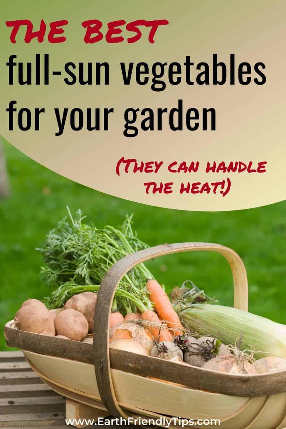 Basket of vegetables text overlay The Best Full Sun Vegetables for Your Garden