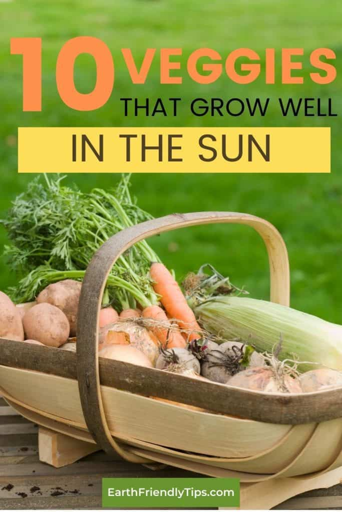 Basket of vegetables text overlay 10 Veggies That Grow Well in the Sun