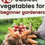 Woman holding vegetables text overlay 15 Easiest Vegetables for Beginner Gardeners