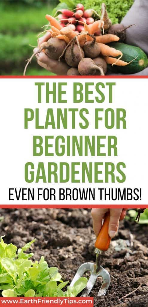 Woman holding vegetables spade digging in dirt text overlay The Best Plants for Beginner Gardeners