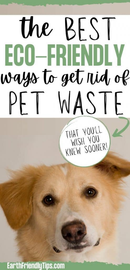 Close up of dog with text overlay The Best Eco-Friendly Ways to Get Rid of Pet Waste