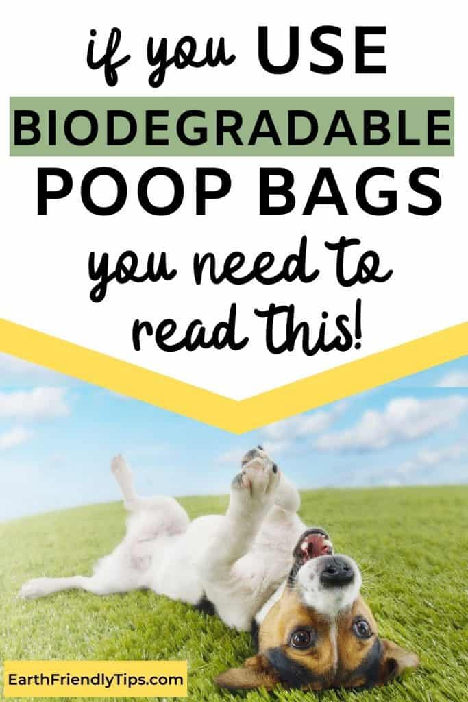 Jack Russell terrier lying on back in grass with text overlay If You Use Biodegradable Poop Bags You Need to Read This