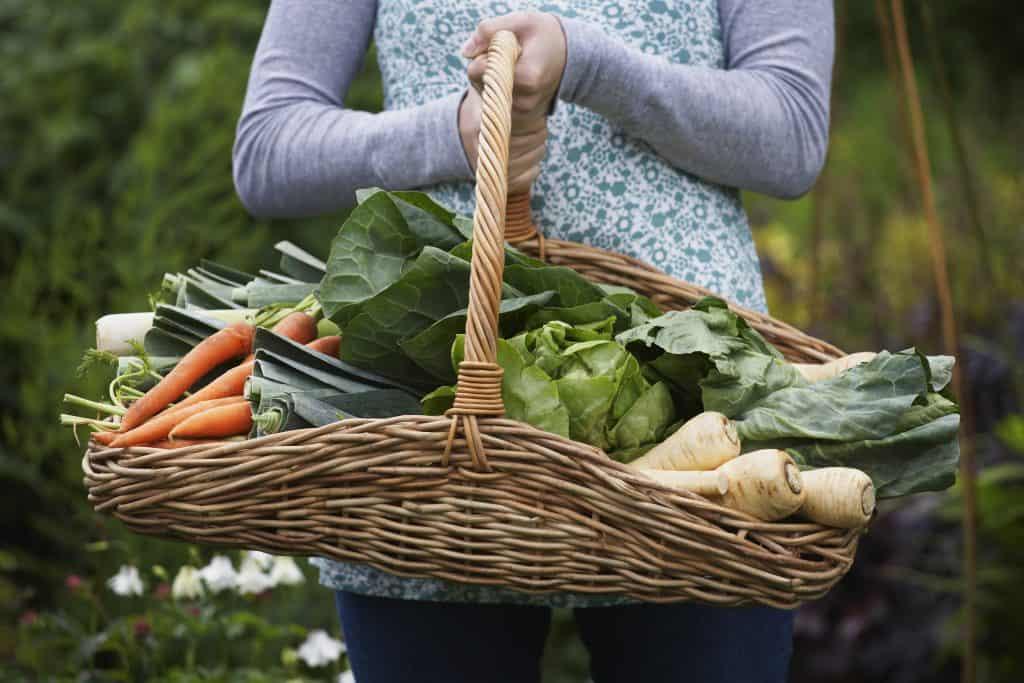 Woman holding wicker basket full of garden vegetables