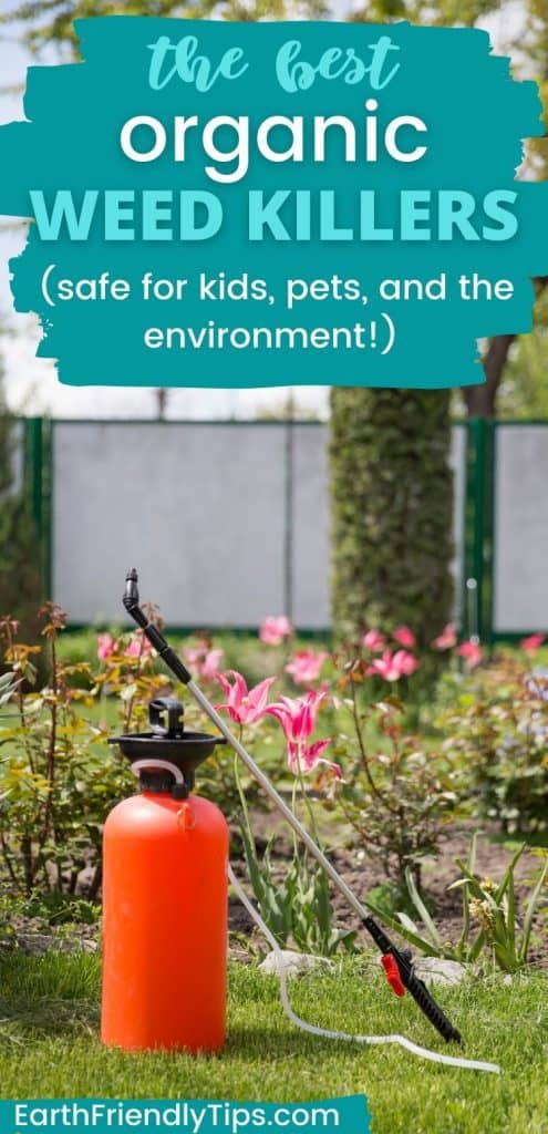 Garden pump sprayer in front of flowers with text overlay The Best Organic Weed Killers