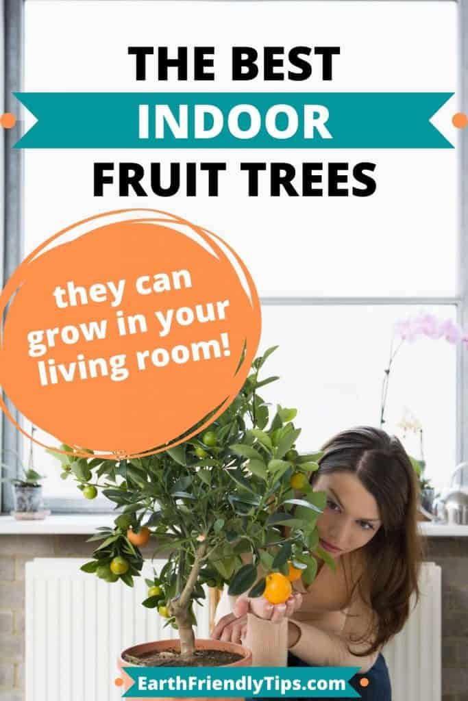 Woman looking at orange tree growing inside with text overlay The Best Indoor Fruit Trees