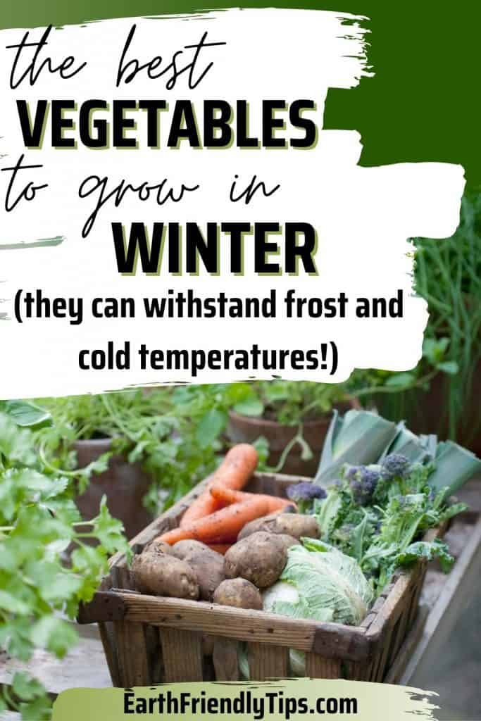 Fresh garden vegetables in wooden crate with text overlay The Best Vegetables to Grow in Winter (They Can Withstand Frost and Cold Temperatures)
