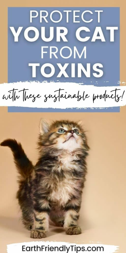 Picture of cute kitten looking up with text overlay Protect Your Cat From Toxins With These Sustainable Products