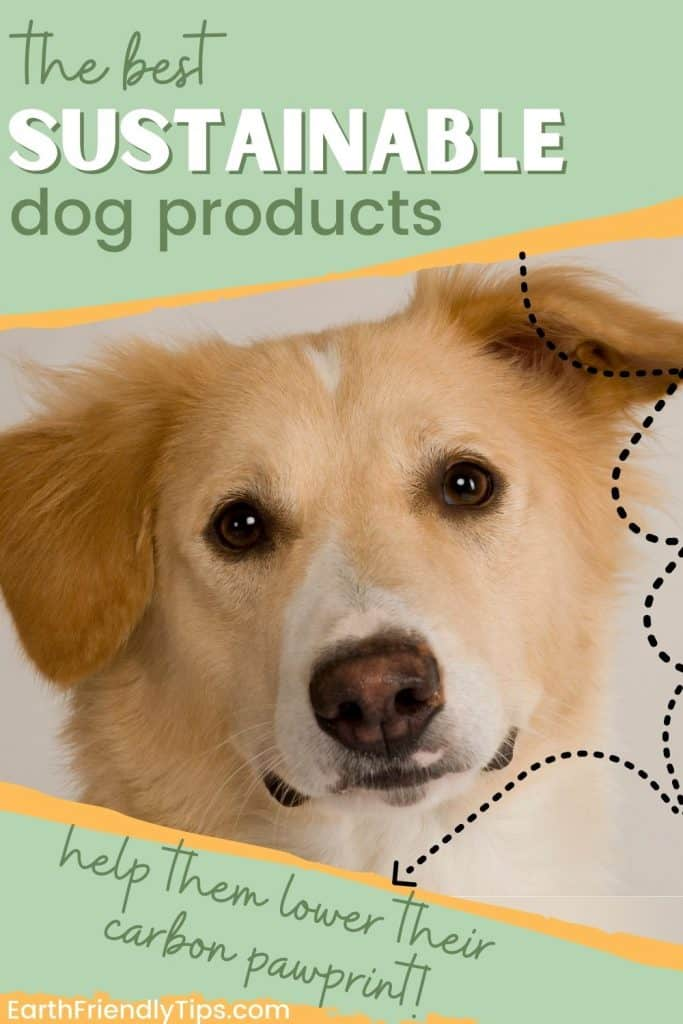 Picture of dog looking directly at camera with text overlay The Best Sustainable Dog Products Help Them Lower Their Carbon Pawprint
